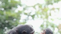 Taronga Zoo Animals Receive Enrichment Treats For Christmas