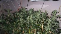 Ohio drug bust nets marijuana growing facility