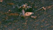 Illinois medical helicopter crash wreckage Credit: WGNtv.com