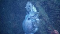 Octopus mum guards eggs for 4 years