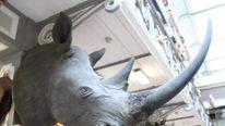 Rhino heads stolen