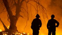 FIREFIGHTERS WATCHES FLAMES BURN THROUGH TREES IN PINE FIRE IN CALIFORNIA.
