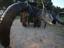Family catches and kills giant alligator. Pic: Sharon Steinmann/Al.com