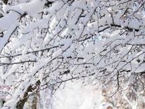 A man pulls his grandson along a snowy sidewalk in Madison, Wisconsin