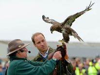 Prince William with hawk