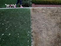 A dead lawn is seen next to an artificial lawn on July 15, 2014 in San Francisco, California.