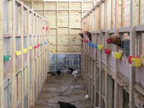 Suspected evidence of illegal cockfighting was found during the raid in Kent.