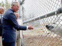 Prince Charles feeds a polar bear at a Manitoba Zoo