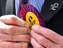 A UK Independence Party (UKIP) supporter pins a party badge to his suit