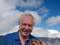 Attenborough films pink iguana