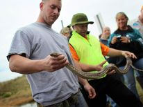 Florida Trains Hunters In Python Eradication catch a Burmese python