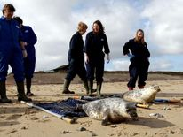 Orphaned seal pups are released back into the wild in Norfolk.