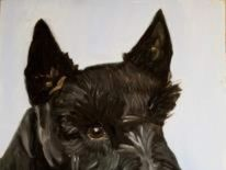 Barney the Scottish terrier