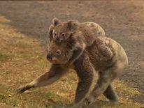 Koalas fled the blaze on North Stradbroke Island