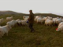 Sheep farming VT