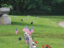 New York Cemetery Flag Vandal Was A Groundhog