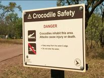 Crocodile suspected of snatching man in Mary River