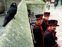Three Tower of London Beefeaters near a raven, in 1996