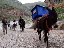Afghan election workers lead donkeys carrying ballot boxes and other materials to polling stations which are not accessible by road in the Kishindih district of Balkh Province