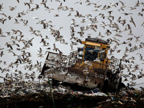 GPS-equipped seagulls can help map out flytipping hotspots
