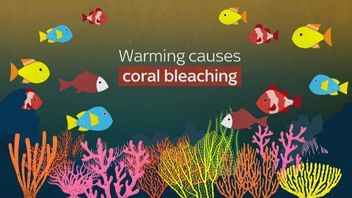 Coral is vital to the health of oceans