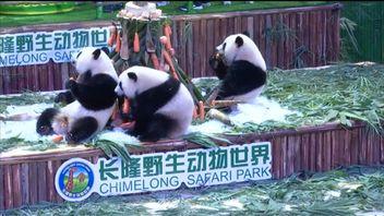Panda triplets celebrate their second birthday with a custom designed cake