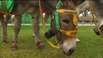 Donkey whisperer claims new technology can translate what the animals are saying
