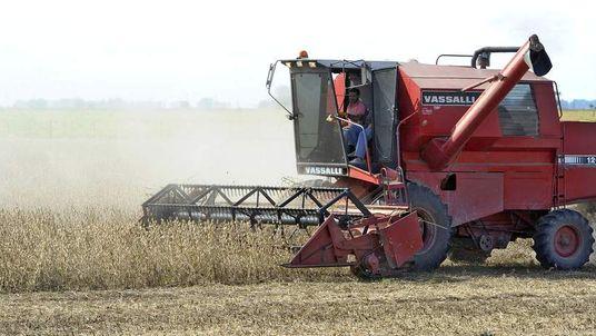 Farmers work in a soybean field