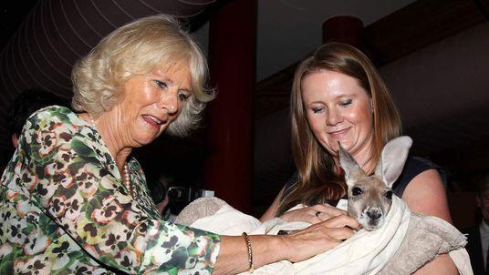 Camilla meets orphan joey kangaroo Ruby Blue