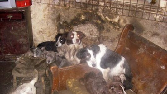 Dogs kept in filthy conditions