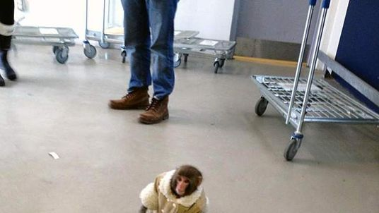 A monkey at the entrance to an Ikea store in Toronto