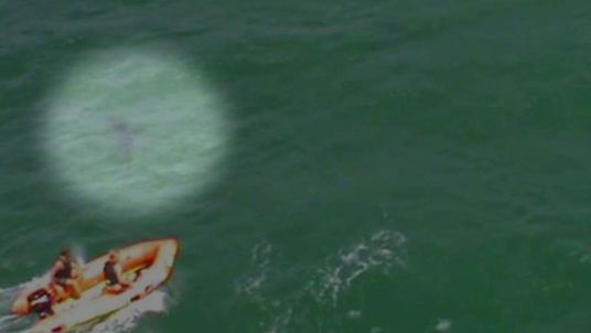 New Zealand shark attack still