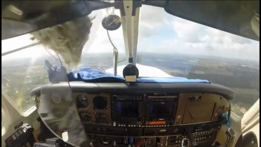 bird smashes into light aircraft windscreen Ft Myers, Florida USA