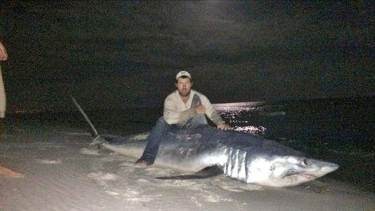 North Florida Fisherman Joey Polk caught a 800-pound mako shark off the Gulf Coast.