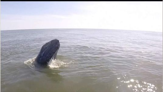 Man Discovers A whale at sea
