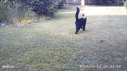 Cats killing birds