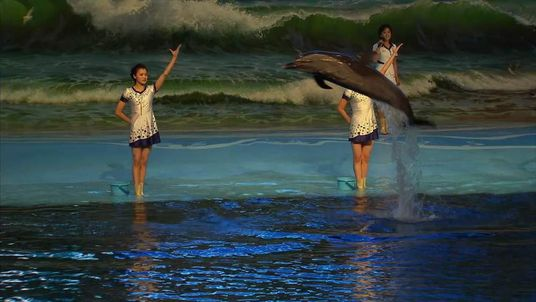 NORTH KOREA DOLPHIN SHOW