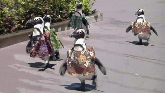 Penguins in African dress at Hakkeijima Sea Paradise