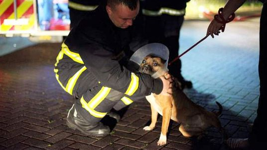 Manchester Dogs' Home Fire: dog rescued