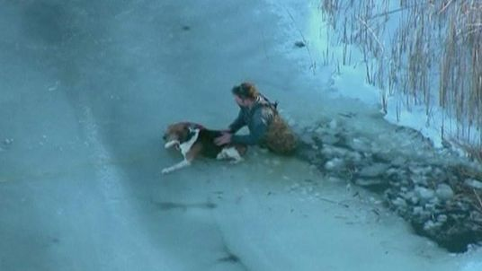 Dog Rescued On Lake Erie Michigan