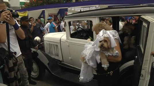 Peru dog weddings