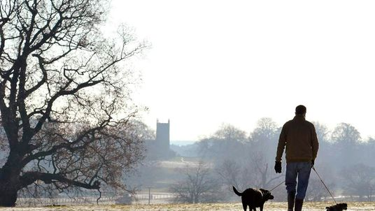 A man walks his dogs across the Royal estate at Sandringham, Norfolk in east England