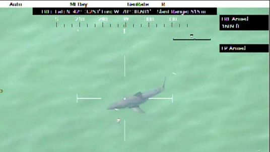 Shark off Massachusetts beach