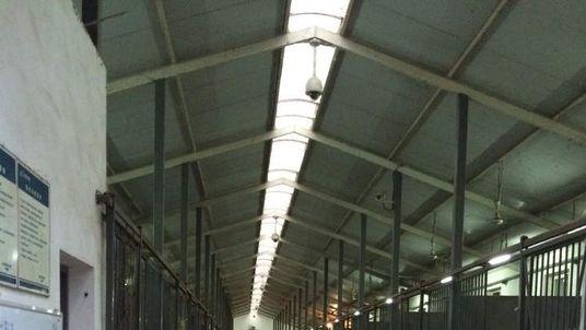 Ren Ningning's stables