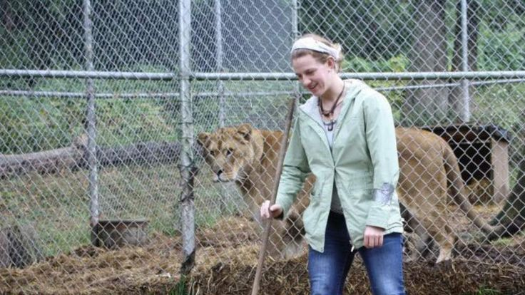 A photo from the facebook account of Dianna Hanson shows her work with big cats