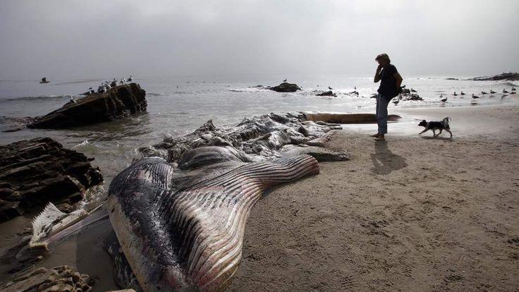 AP Whale 2