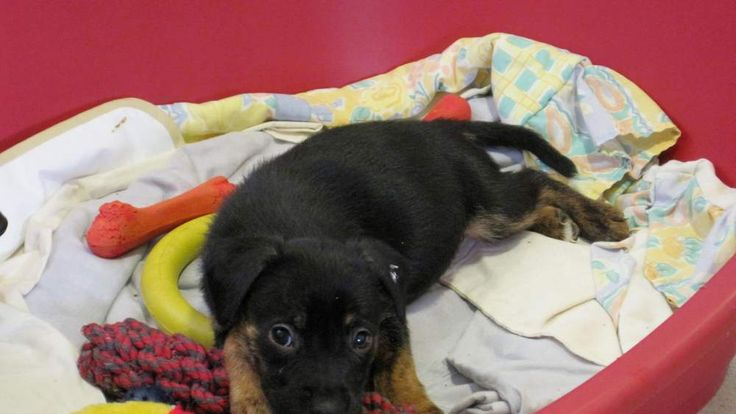 Puppy At Dogs Trust Home