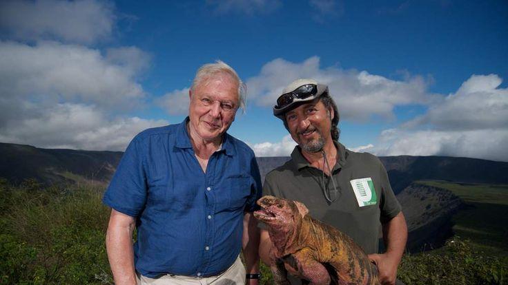 Attenborough films pink iguana