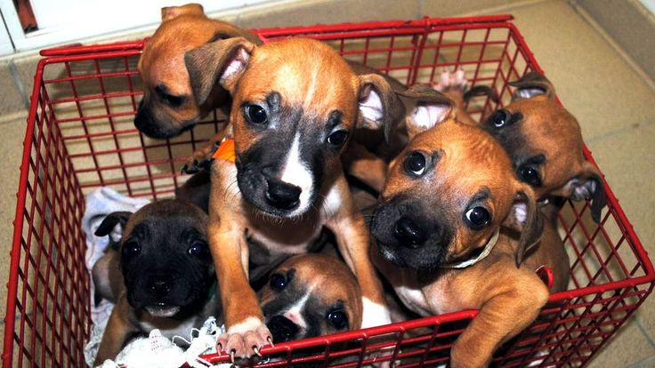 Litter of puppies found abandoned in Peckham, south London