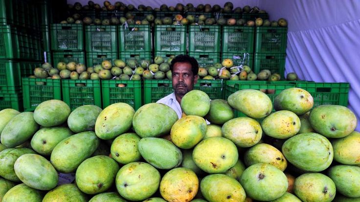 Indian farmer with his mangoes
